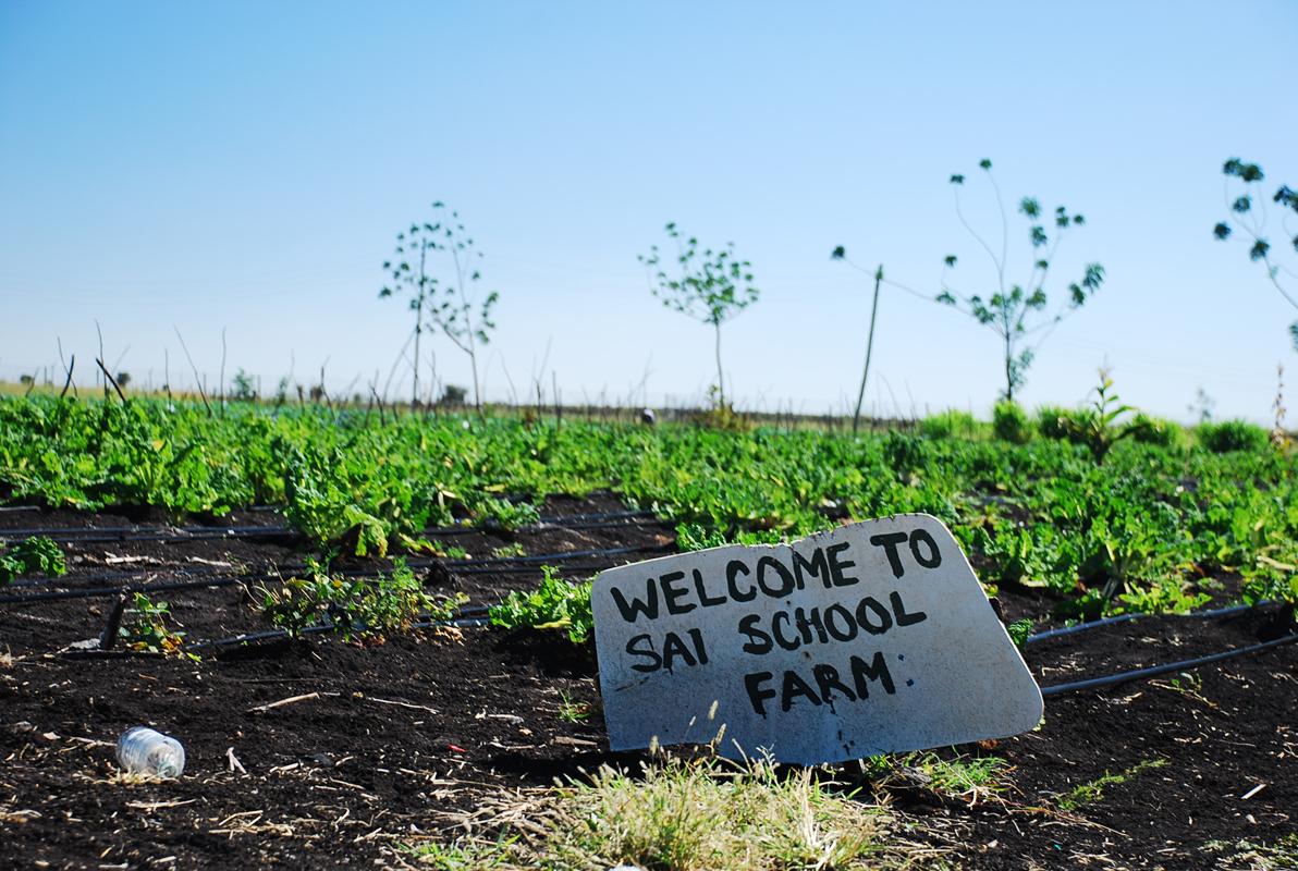 Sai Farm