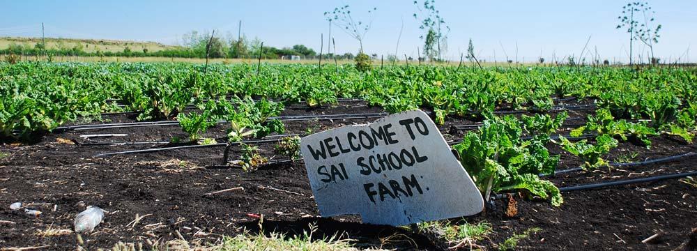 Sai School Farm